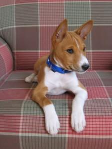 Riley Kingsley puppy